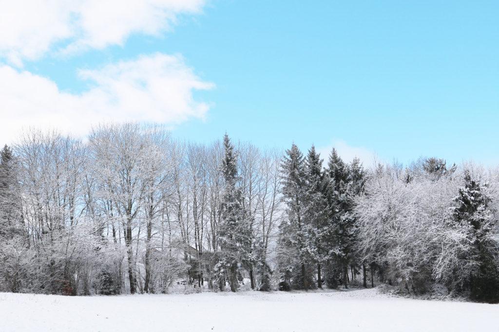 Paysage enneigé forêt hiver
